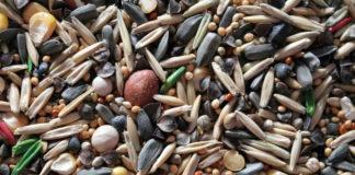 Jak i gdzie kupować sprawdzone nasiona warzyw do domowego ogródka