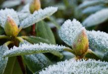 Usuwanie zimowych okryć z roślinności ogrodowej